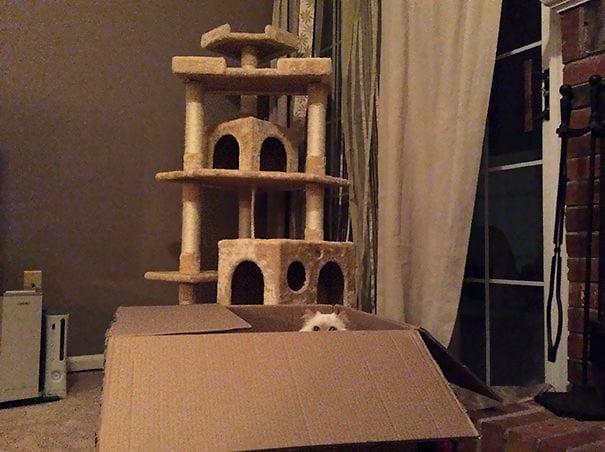 22 фото того, как кошки приняли подарки от хозяев