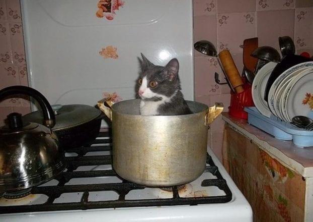 24 фото котов, которые завели себе хозяев