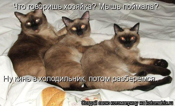 34 мышиные фотоистории, за которые котам должно быть стыдно