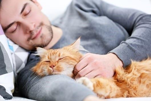 3 причины, по которым кошка спит с вами