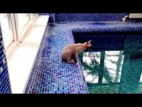 ВИДЕО: Коту лень обходить бассейн, и он решает срезать путь