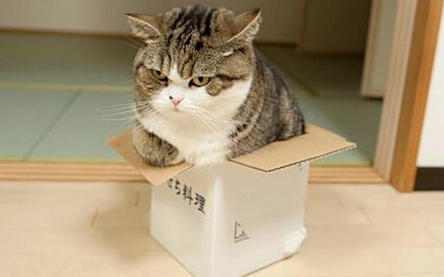 Ибо нет на свете такой коробки, в которую бы не мог забраться кот...