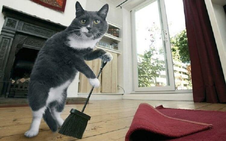 Проверенный и простой способ избавиться от кошачьих меток