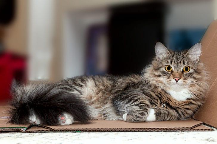 Как мой кот уложил меня в травматологию и даже ни граммульки не раскаялся