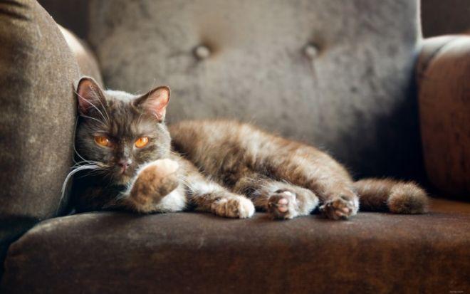 Как коты проявляют свою любовь - 6 признаков