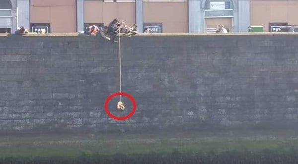 Котенок тонул без шансов на спасение, но произошло чудо