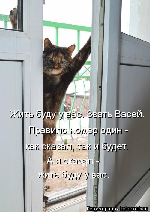 27 забавных фотоисторий про кошек