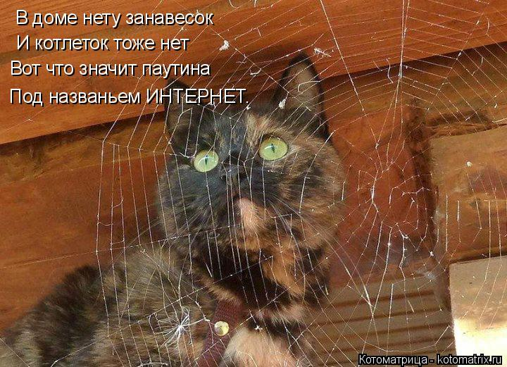 12 веселых четверостиший с картинками о котах и не только