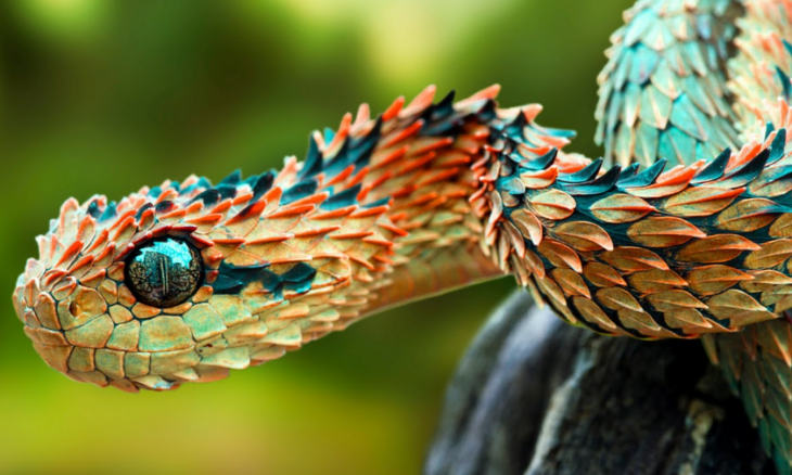 20 фото редких животных с необычной внешностью