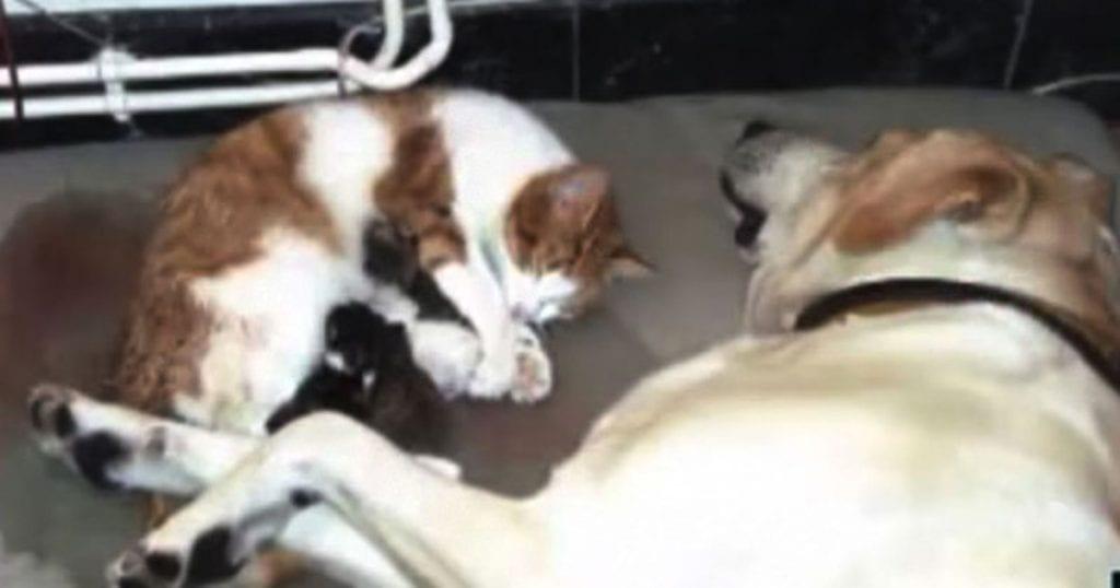 ВИДЕО: Пёс принял сложные роды у кошки