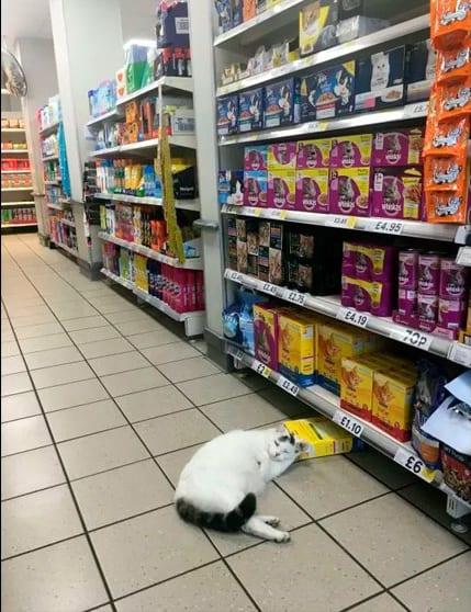 Кот-рецидивист обнаружен на месте преступления... спящим