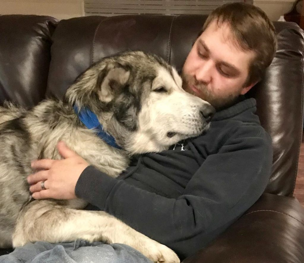 Спасенный от нерадивых хозяев пес оказался породистым маламутом
