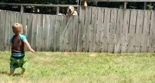 ВИДЕО: Малыш играет с соседским псом прямо через забор