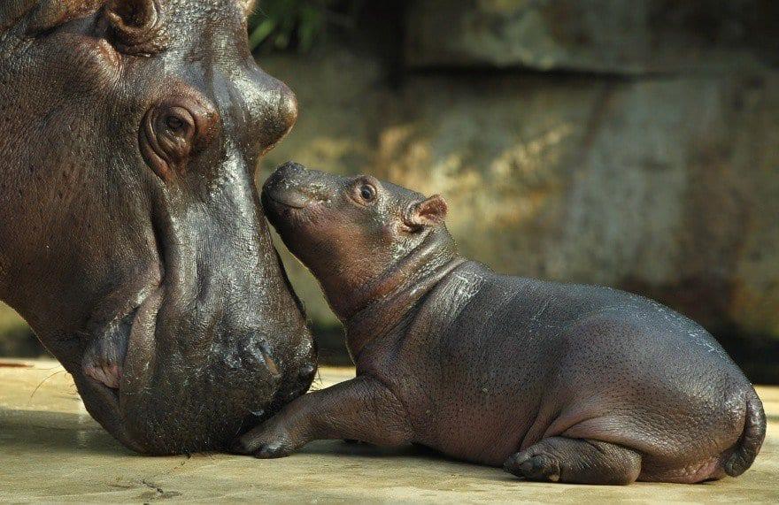 22 фото нежных отношений мам со своими малышами