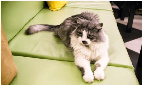 Кошка-акция, или как женщина взяла из приюта брошенное животное