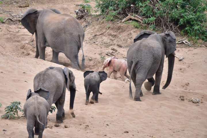 Турист сделал фото слоненка с редким генетическим заболеванием
