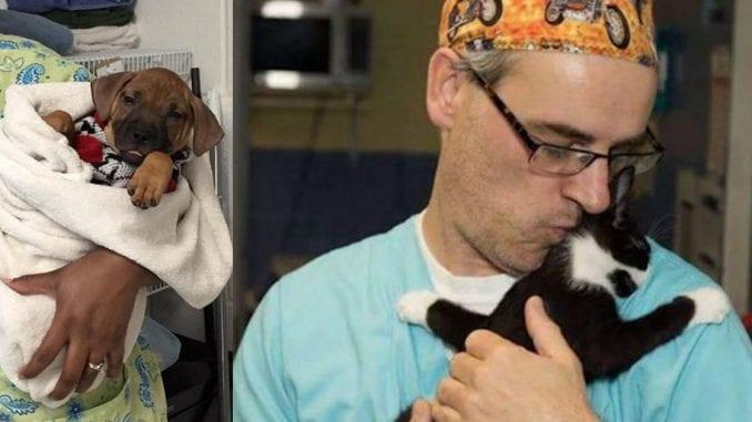 Врачи приюта поют животным после операции, чтобы те не боялись