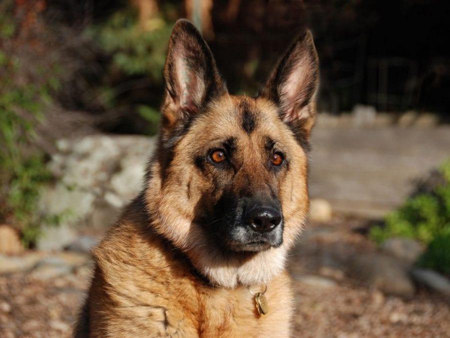 Пронзительная история о том, как старый пес спас в человеке — Человека!