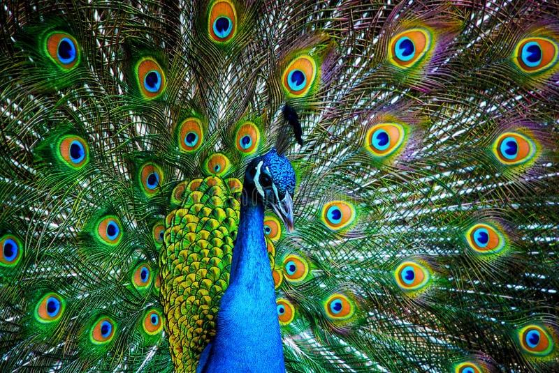 Узнайте ваше духовное животное по знаку зодиака