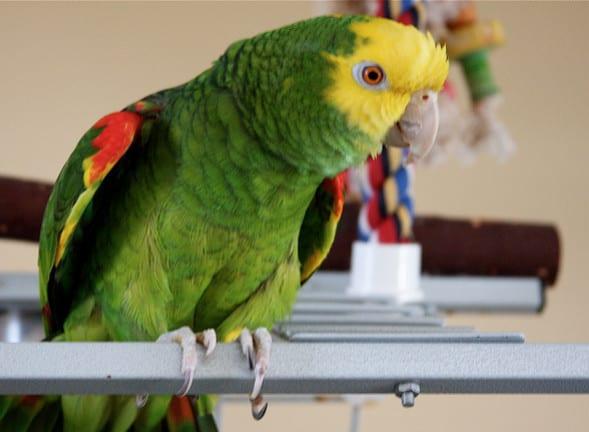 """Юморное объявление на Авито: """"Продам попугая!"""""""