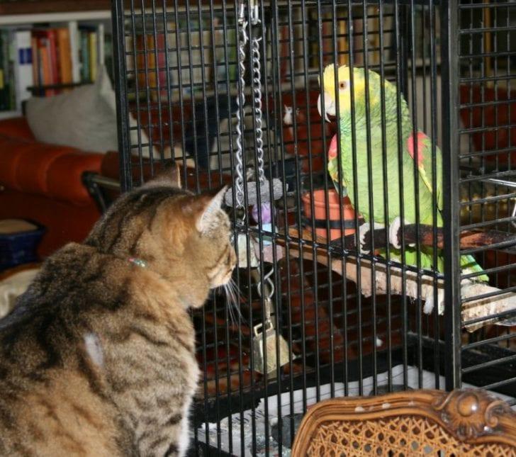 Попугай изощренно отомстил коту за постоянные издевательства