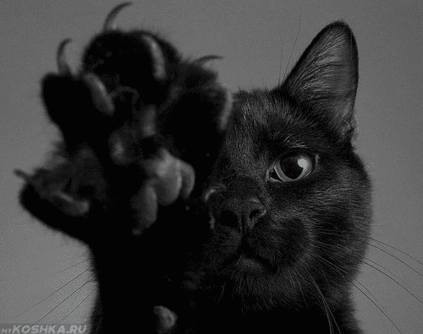 24 фото котиков за любимыми занятиями