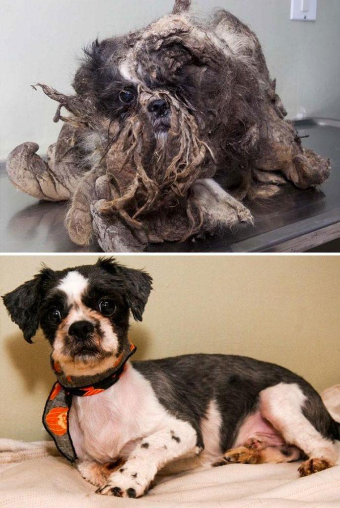 Чудесные истории спасения: 16 собак, которых могло бы уже не быть на этом свете