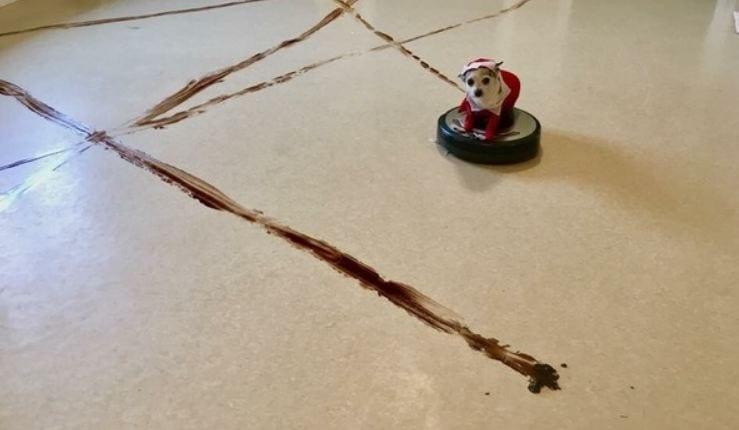 Феерический провал пёсика-чистюли