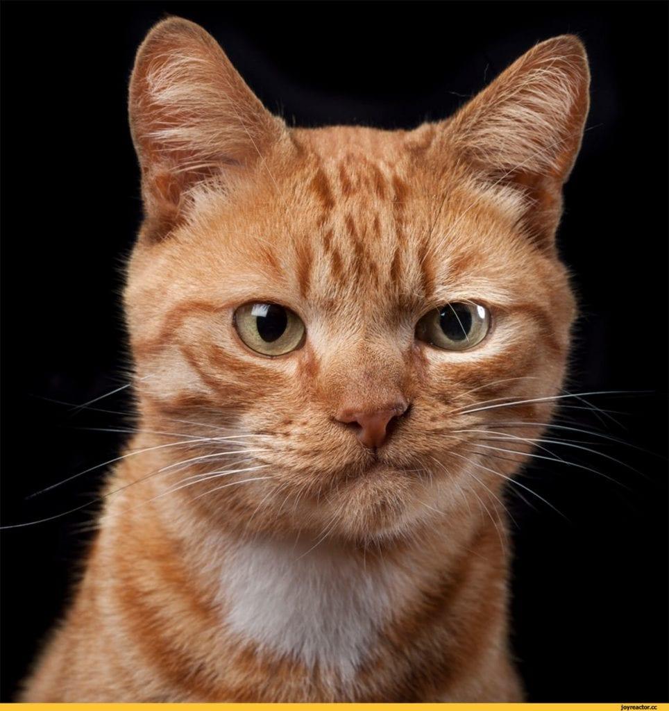 День из жизни рыжего кота Марса. Отрывок из дневника.