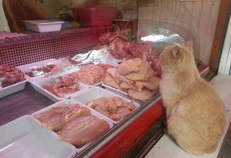Кот выпрашивал в магазине мясо и куда-то уносил