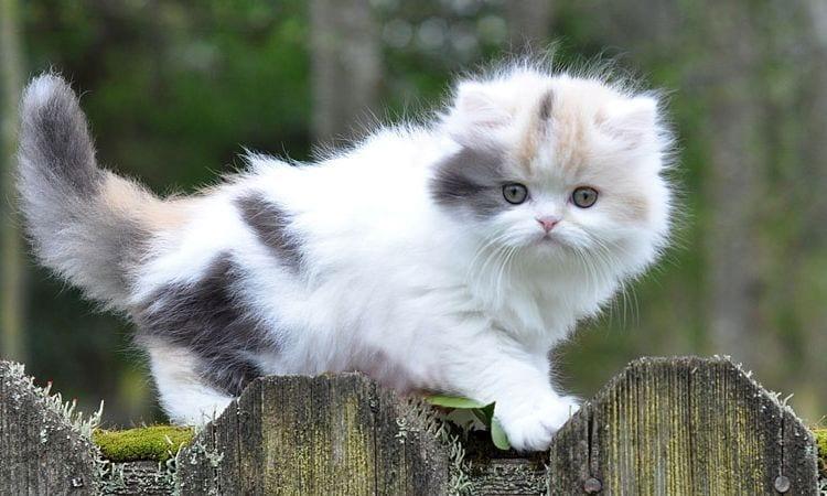 1 смешной и 13 поразительных фактов о котах