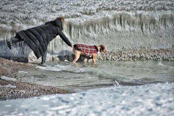 Хозяйка не сразу поняла, зачем собака на прогулке полезла в ледяную воду