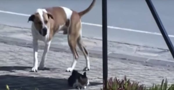 Огромный пес громко лаял на кошку. Оказалось, он звал на помощь.