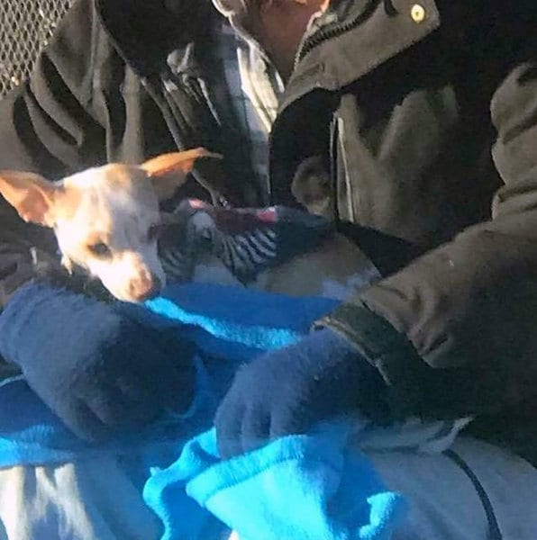Бездомный спас выброшенную собачку, а она поменяла его жизнь