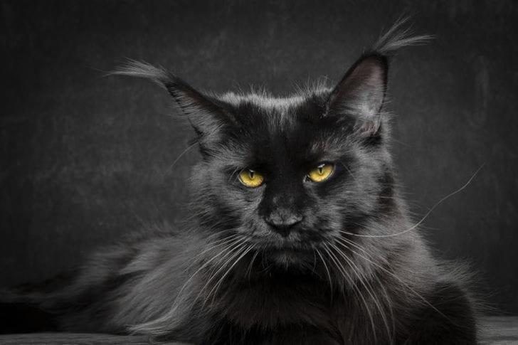 Подвальный кот спас своих собратьев от верной смeрти