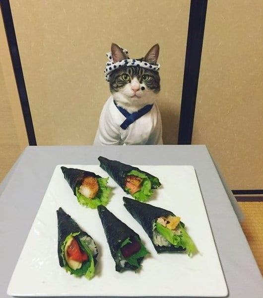 28 фото немного странных котов