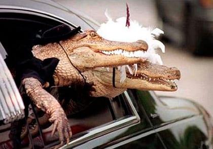 25 свадебных фото животных