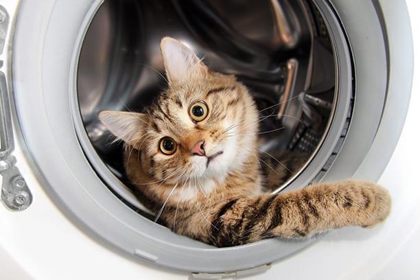 20 фото-доказательств, что стиральные машины созданы именно для котов