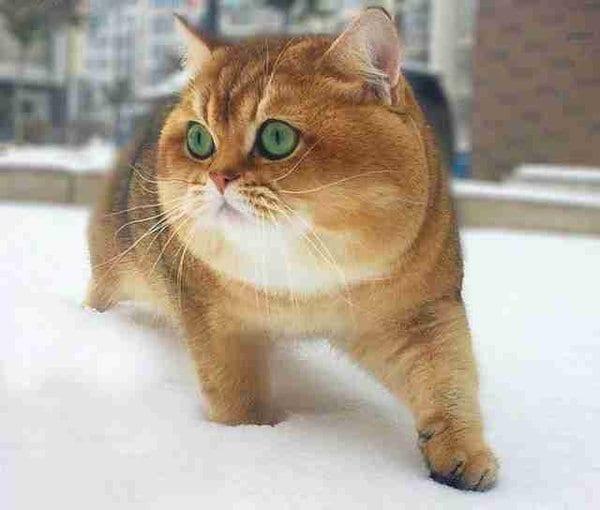 ФОТОЗАГАДКА: Что это за зверь?