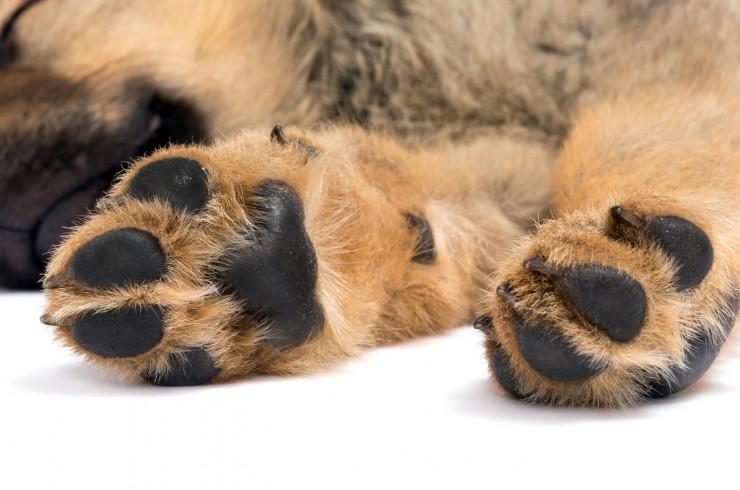 10 поразительных фактов о собаках, которые вы, скорее всего, не знали