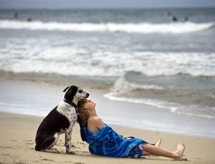 Не прогадал, когда взял пса у хозяев, которые не могли больше о нем заботиться
