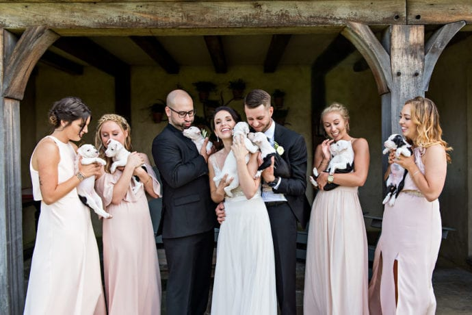 Свадьба, на которой вместо цветов были щенки