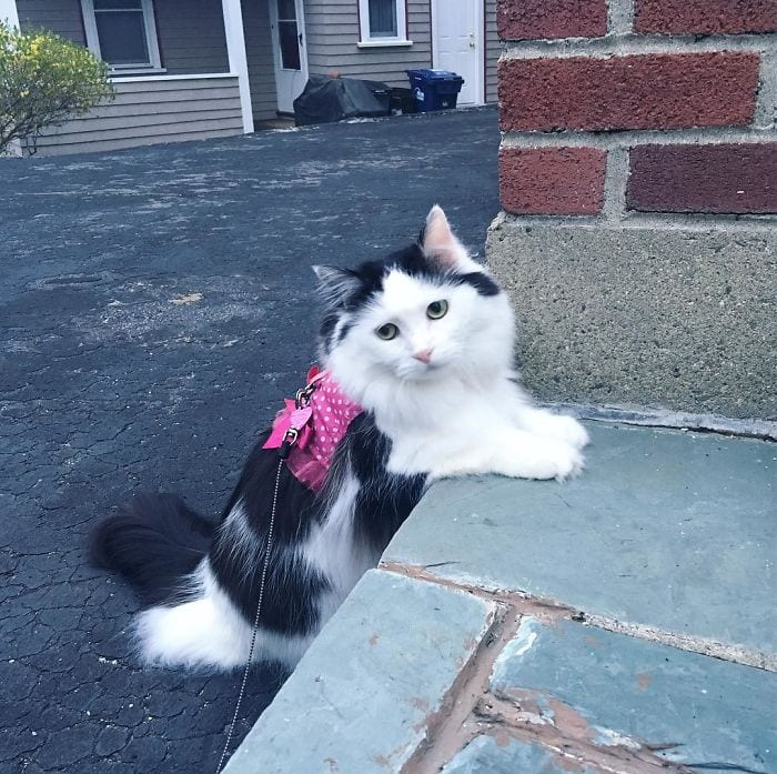 Уже 2 года влюблённый кот ходит в гости к соседке