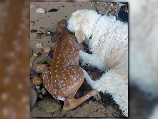 На прогулке пес неожиданно кинулся в холодную воду и вернулся с сюрпризом