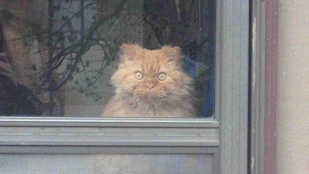 25 доказательств того, что кошки - инопланетяне