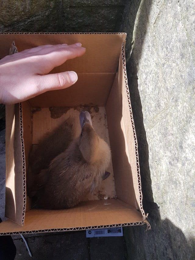 Женщина нашла на пороге коробку с необычными подкидышами