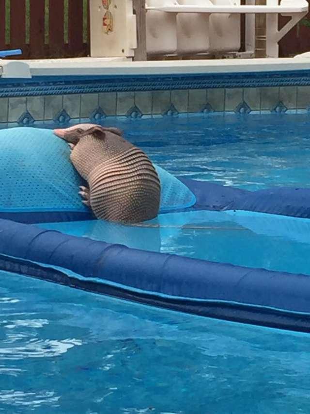 Пока семья отдыхала на курорте, их бассейн оккупировал незваный гость