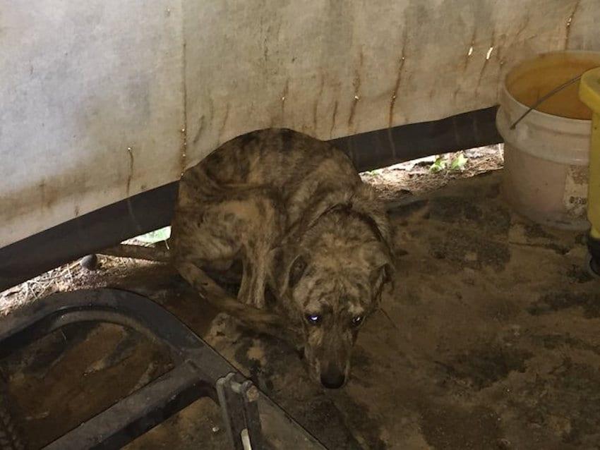 У себя в сарае женщина нашла чужую собаку, которой срочно нужна была помощь