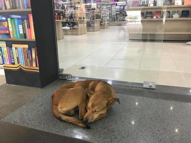 Бездомная собака придумала оригинальный способ найти дом