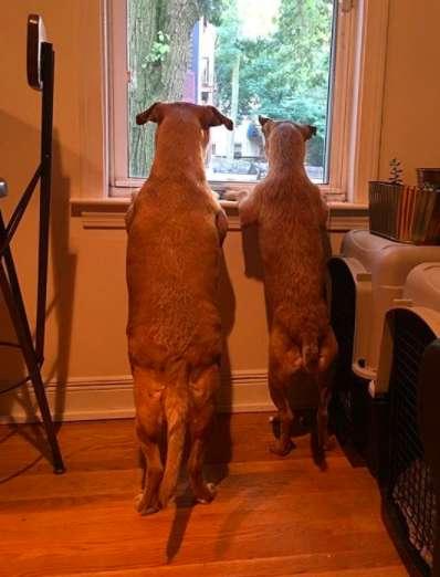 Собака убедила хозяйку забрать с улицы своего близнеца